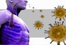 दुनिया भर के वैज्ञानिक कोरोना वायरस पर रिसर्च कर रहे हैं कि यह आखिर इंसानों तक कैसे पहुंचा? इस संबंध में वैज्ञानिक विभिन्न प्रजातियों का अध्ययन कर रहे हैं और उनका ऐसा अनुमान है कि आवारा कुत्तों ने, खास कर उनकी आंतों ने इस महामारी की उत्पत्ति में भूमिका अदा की है। मालिक्यूलर बायोलोजी एंड एवोल्यूशन में प्रकाशित अध्ययन के अनुसार, यह बीमारी सांपों से शुरू हो कर कई प्रजातियों में होती हुई हाल ही में पेंगोलिन तक पहुंची है। और संभवत: इन सभी जानवरों का सार्स कोविड 2 के संक्रमण को एक दूसरे के बीच फैलाने में हाथ रहा और इस प्रकार यह चमगादड़ों तक और उसके बाद इंसानों तक पहुंचा। कनाडा में ओटावा यूनिवर्सिटी के शिहुआ शिया के अनुसार इन जानवरों से लिए गए वायरस, सार्स कोविड 2 से काफी अलग हैं। शिया ने बताया, ''सार्स कोविड 2 के पूर्वज वायरस और उनका निकट संबंधी वायरस, चमगादड़ों में पाया जाने वाला वायरस है, जिससे भेड़िए और कुत्तों पर आधारित कैनिडाए परिवार की आंतों में संक्रमण हुआ और संभवत: उनमें तीव्र क्रमिक विकास हुआ और वायरस छलांग लगा कर इंसानों तक में पहुंच गया। पूरी दुनिया में वैज्ञानिक उन प्रजातियों का पता लगाने में जुटे हैं जिनसे कोरोना वायरस मूल रूप से निकला और इंसानों तक पहुंच गया। शोधकर्ताओं का मानना है कि इस अध्ययन के परिणाम इस बात को रेखांकित करते हैं कि कैनिडाए परिवार में कोरोना वायरस जैसे सार्स की निगरानी की जरूरत है। शी कहते हैं कि इंसानों और स्तनपायी में एक महत्वपूर्ण एंटीवायरल प्रोटीन जेडएपी होता है, जो एक वायरस को उसके मार्ग में ही रोक देता है। वह इस वायरस को उसके मूल में ही बढ़ने से रोक कर इसके जीनोम का क्षरण करता है। शी ने बताया कि जेडएपी एक रसायनिक जोड़े सीपीजी डाइन्यूक्लिओटाइड को उसके आरएनए जीनोम के भीतर निशाना बनाता है। लेकिन वायरस फिर से हमलावर हो सकता है। उनका कहना है कि सार्स कोविड जैसा कोरोना वायरस जेडएपी से बच सकता है और इस तरह से यह एंटीवायरल प्रोटीन को बेअसर कर देता है। शोधकर्ताओं के अनुसार, इसका एक परिणाम यह हो सकता है कि वायरल जीनोम पर बाकी सीपीजी डाइन्यूक्लिओटाइड का बने रहना महत्वपूर्ण हो सकता है। इस शोध में शिया ने सभी 1252 बीटाकोरोनावायरस जीनोम का अध्ययन किया जो जीन बैंक में जमा हैं। जेनेटिक सीक्वेंस वाले इस डाटाबेस तक पहुंच निर्बाधित है। उन्होंने बताया, 