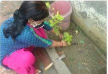 विश्व पर्यावरण दिवस पर राष्ट्रीय सेवा योजना तिलकधारी महिला महाविद्यालय ने किया पौधरोपण